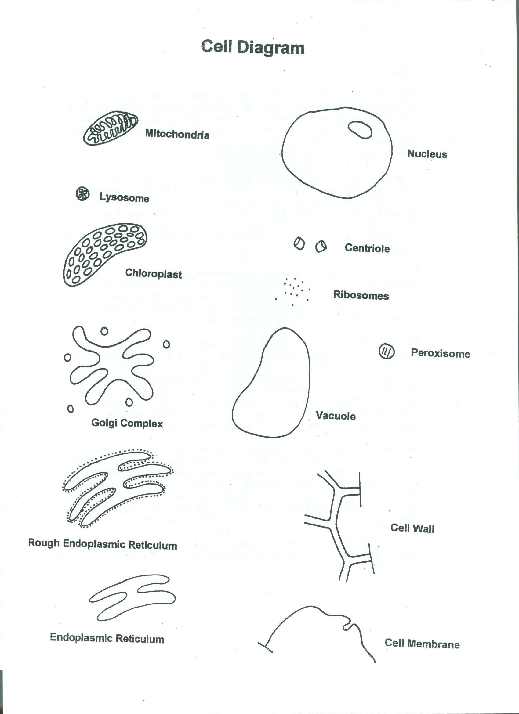 Cells Reading Back Diagrams 001 1 700 2 340 Pixels