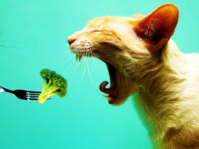http://cdn2.stillgalaxy.com/640x/2012/03/19/i-hate-vegetables-cat-crying-0.jpg