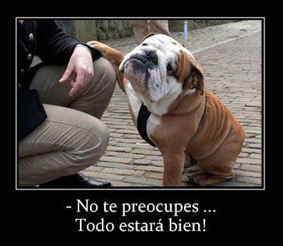 Frase E Imagen Graciosa Con Animales Cotizaciones De Bulldogs Bulldog Ingles Divertido Perros Bulldog Ingles