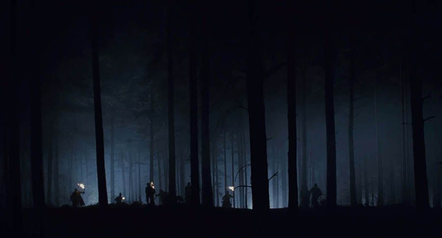 night forest night in the wood