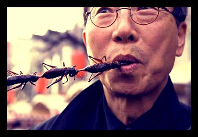 Bite Of The Day: Did you know that Insects form part of the regular diet of an incredible 2 billion people worldwide! www.eatgrub.co.uk