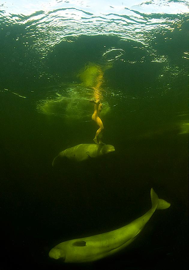 Natalia Avseenko With White Whales, Polar Circle, Russia