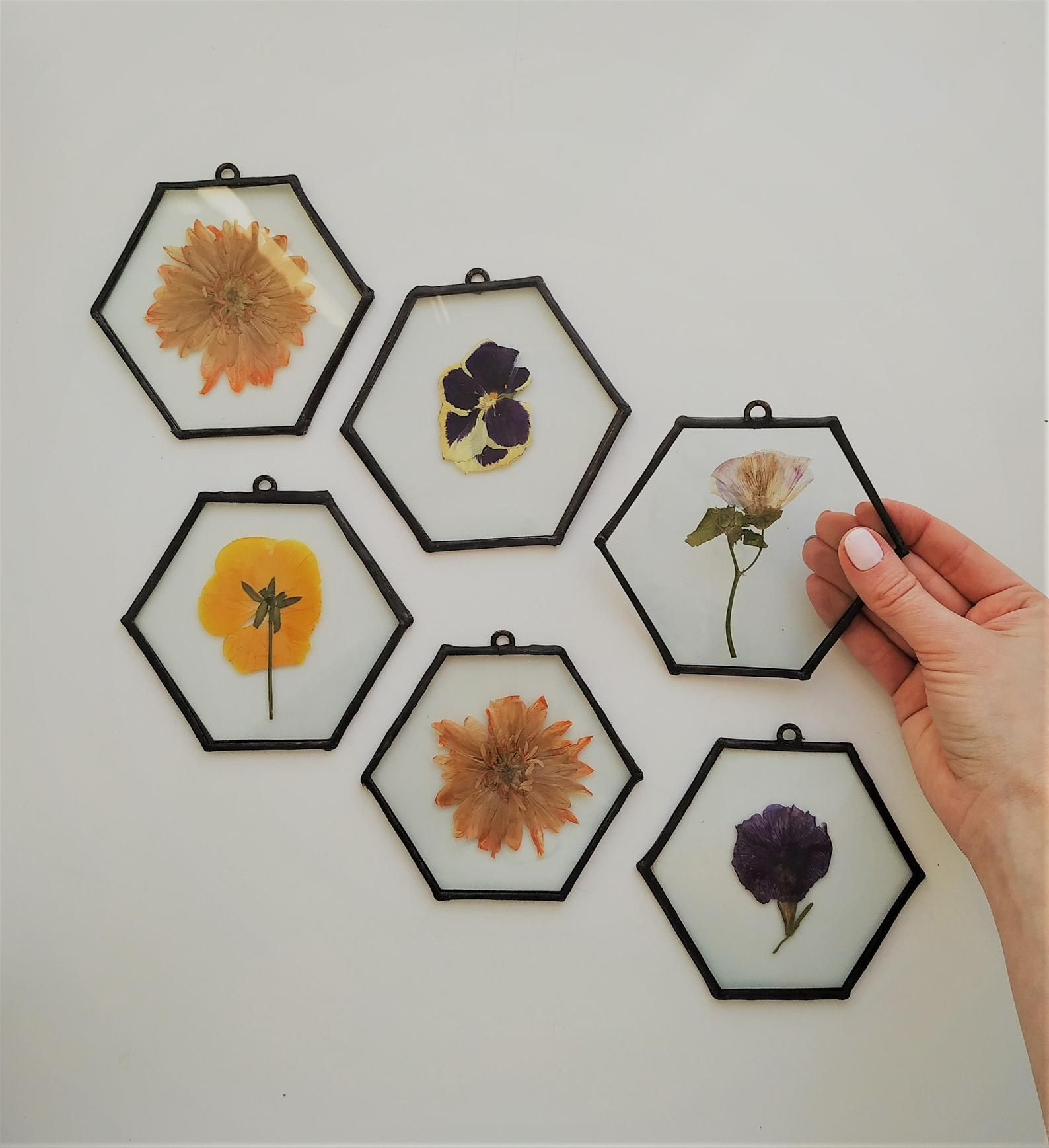 Herbarium set of 6 pressed flower frame - dry flowers frame - bright flower decoration on the wall of glass and metal #setinstains