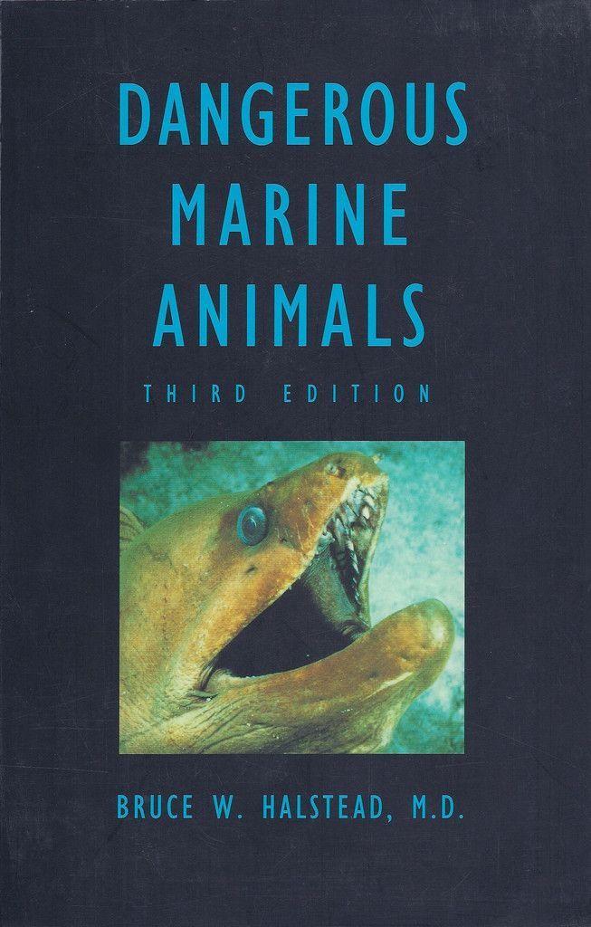 Dangerous Marine Animals Marines, Underwater animals and Shark - marine biologist job description