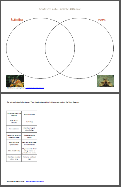 Moths And Butterflies Venn Diagram Worksheet Homeschool Biology