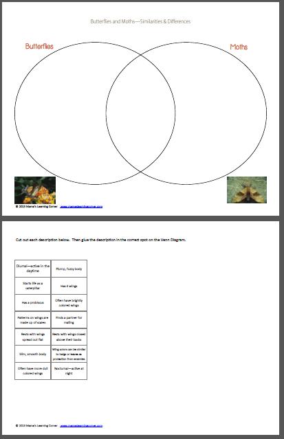 Moths and butterflies venn diagram worksheet venn diagram moths and butterflies venn diagram worksheet ccuart Gallery
