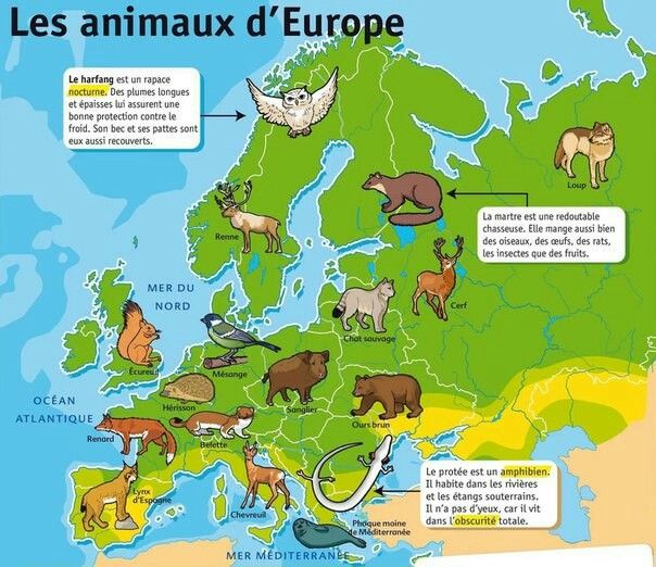 Les Animaux D Europe Geographie Animaux Vie Animale