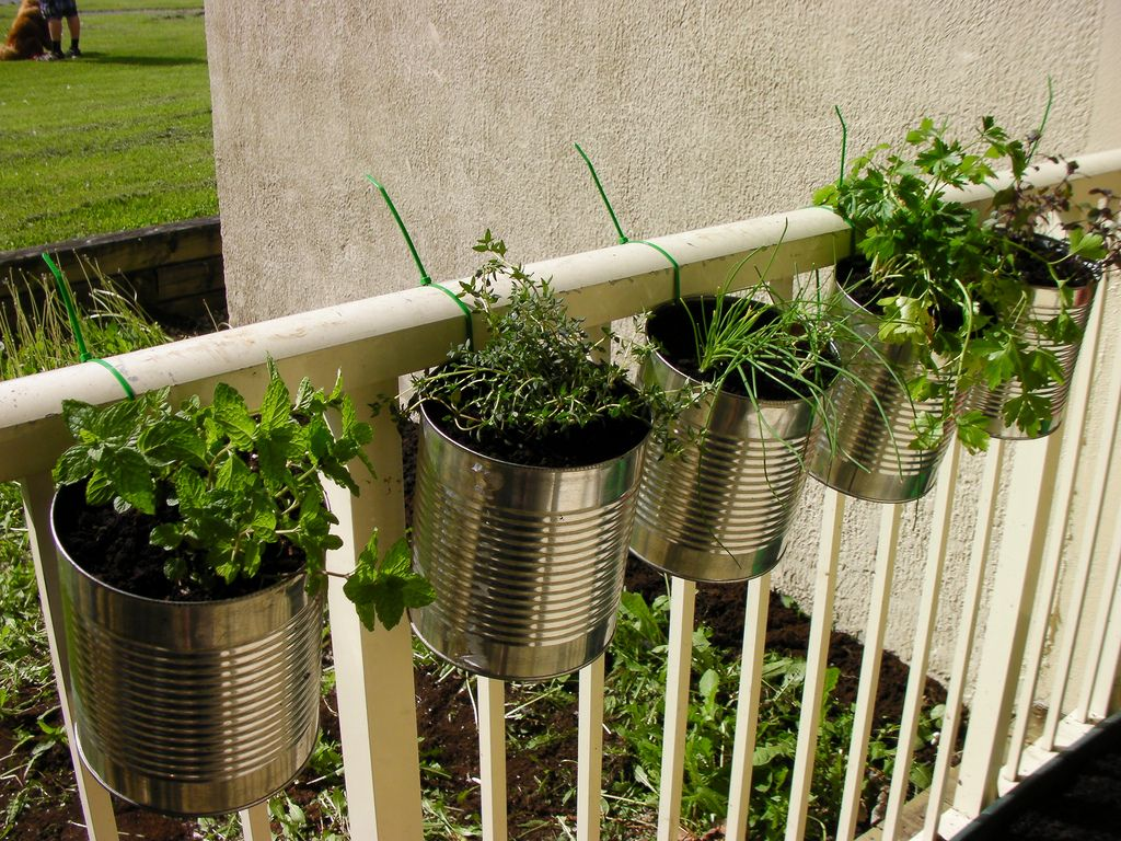 Herbs in coffee cans, hung with zip ties. I take no credit