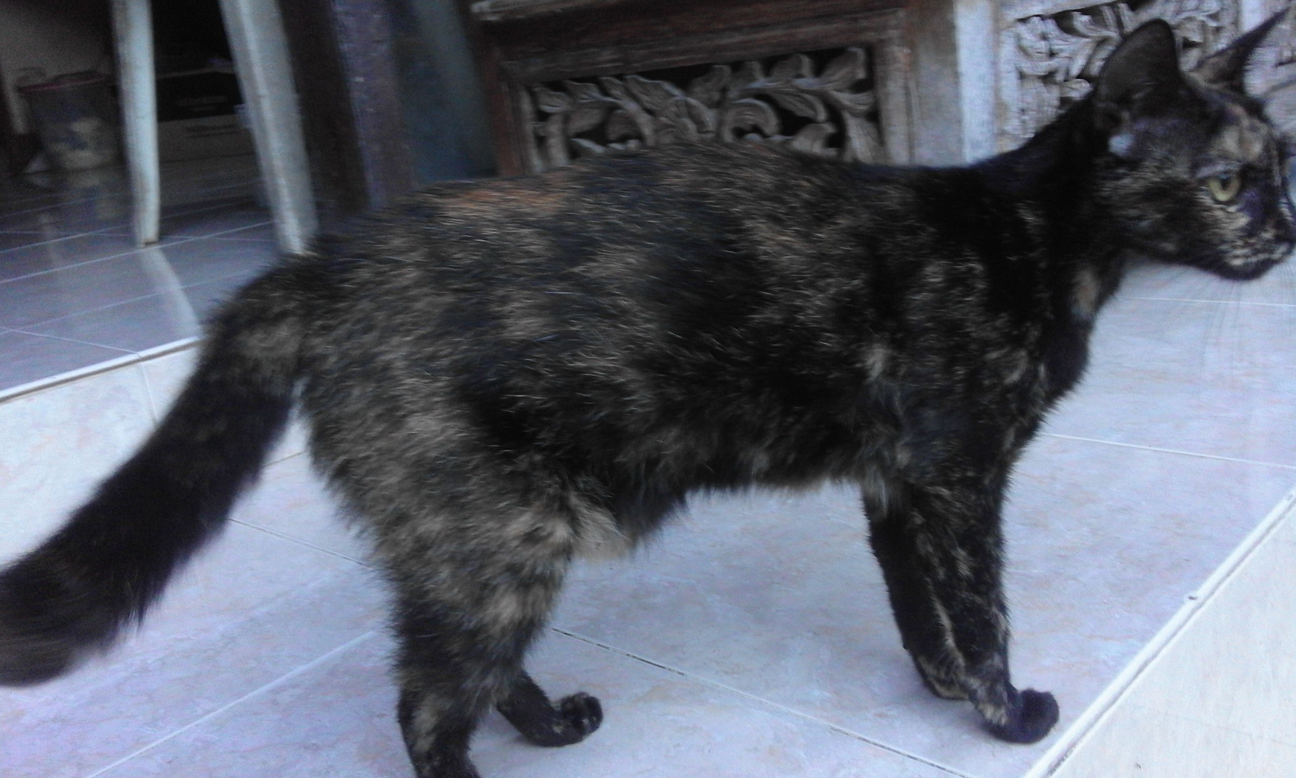 Nama Kucing Jantan Dan Betina Yang Bagus Lucu Unik Dan Keren Kucing Lucu Betina