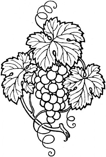 Bunch Of Grapes With Leaves Coloring Page To Use As An Embroidery Pattern