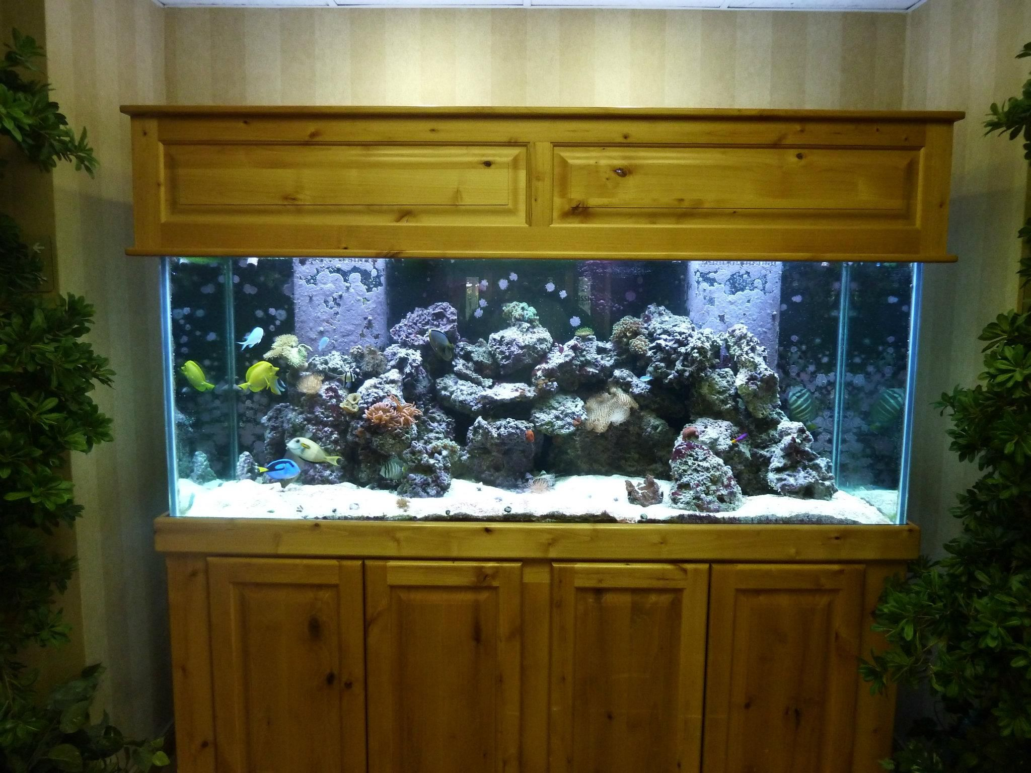 Aquarium Furniture Ideas, Diy, Design, Inspiration, Old Tv, Ipad, Modern,