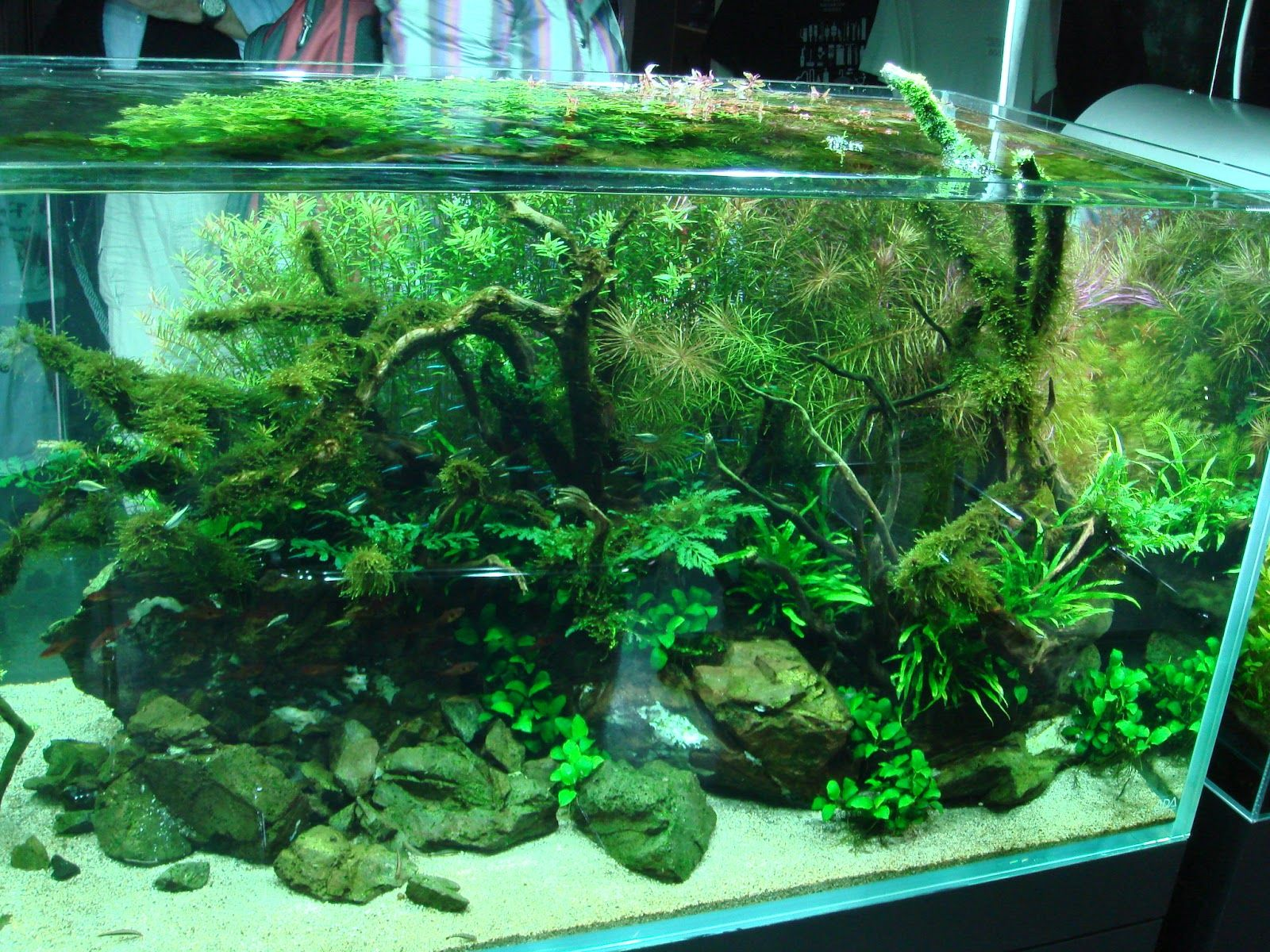 423 best Moss Tank images on Pinterest