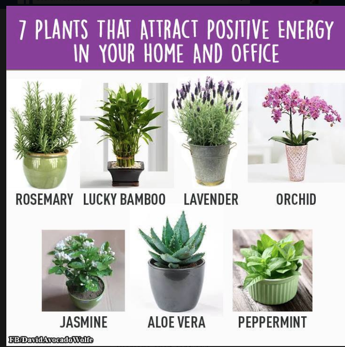 7 plants that attract positive energy gardening my passion pinterest. Black Bedroom Furniture Sets. Home Design Ideas