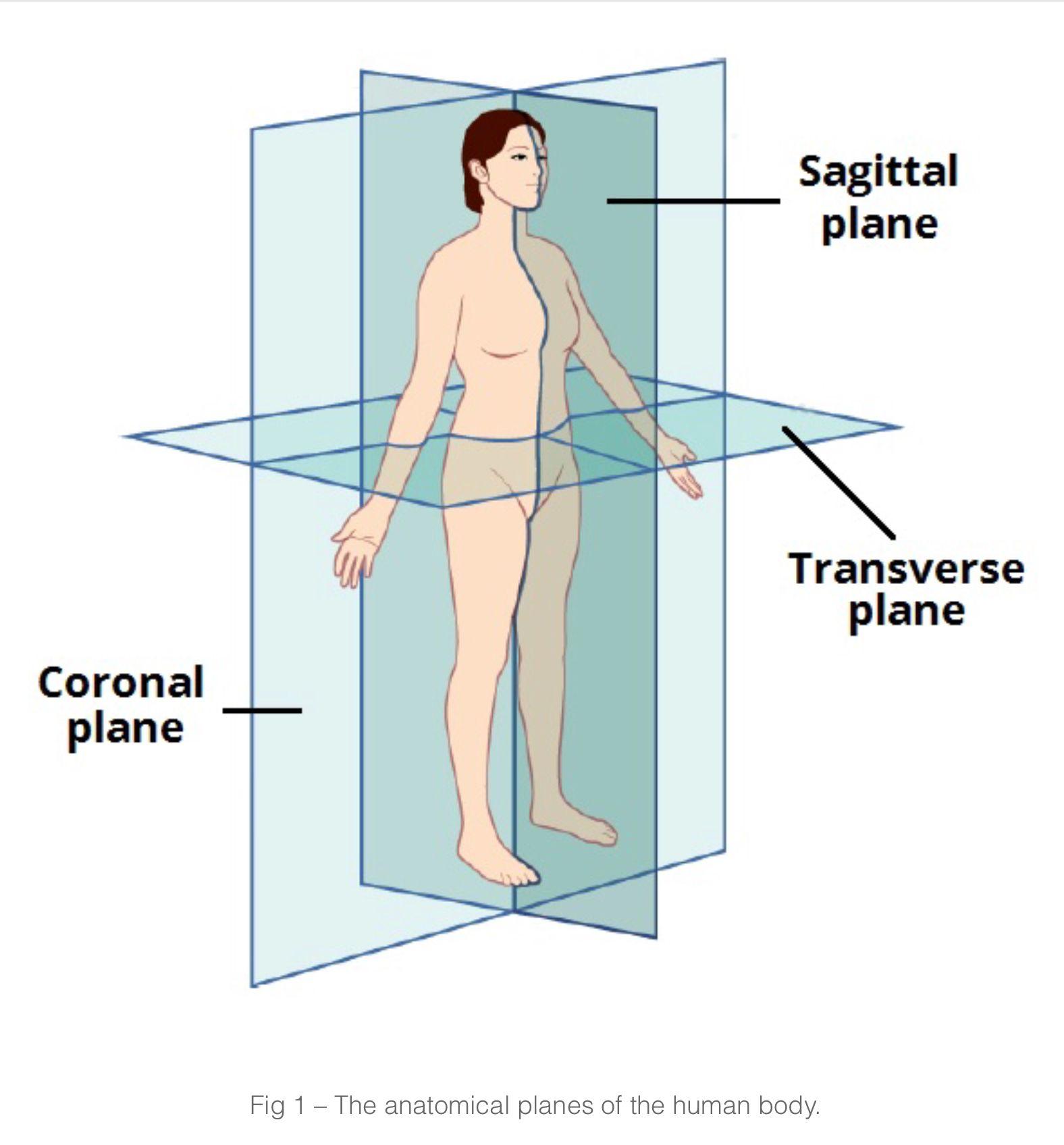Human Anatomy Planes Images Human Anatomy Organs Diagram