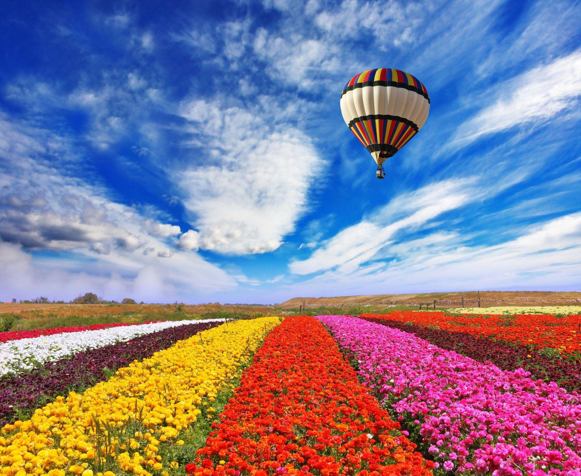Vehicles Hot Air Balloon Sky Cloud Flower Field Yellow