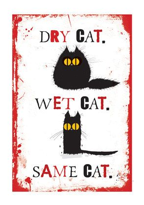 Dry Cat, Wet Cat, Same Cat by Fishykins (MadOldCatLady)