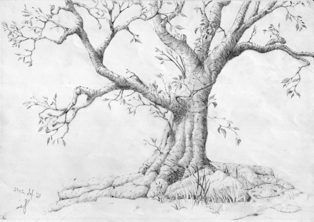 Pencil Drawings Of Trees