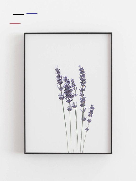 Pin By Bartomeu Nimrod On Watercolor In 2020 Lavender Walls Botanical Wall Art Botanical Prints