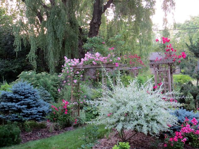 I Love The Combination Of Blue Grays And Pinks In This Wisconsin Garden.  Fine Gardening GPOD