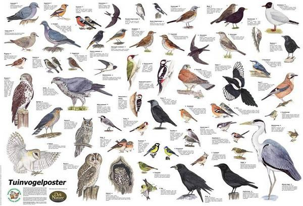 Wonderbaar soorten vogels spanje - Google zoeken | Vogels, Dieren redden QW-42