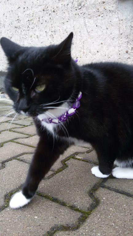 Cats - Katzen, eigene Fotos! – Community – Google+