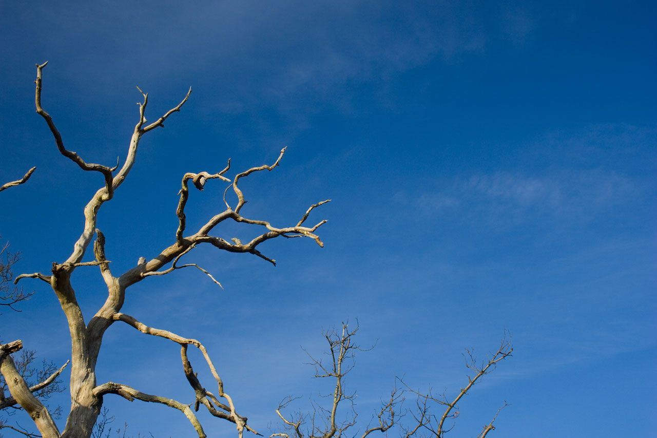Dead Branch Royalty Free Stock Photos All Pictures Are
