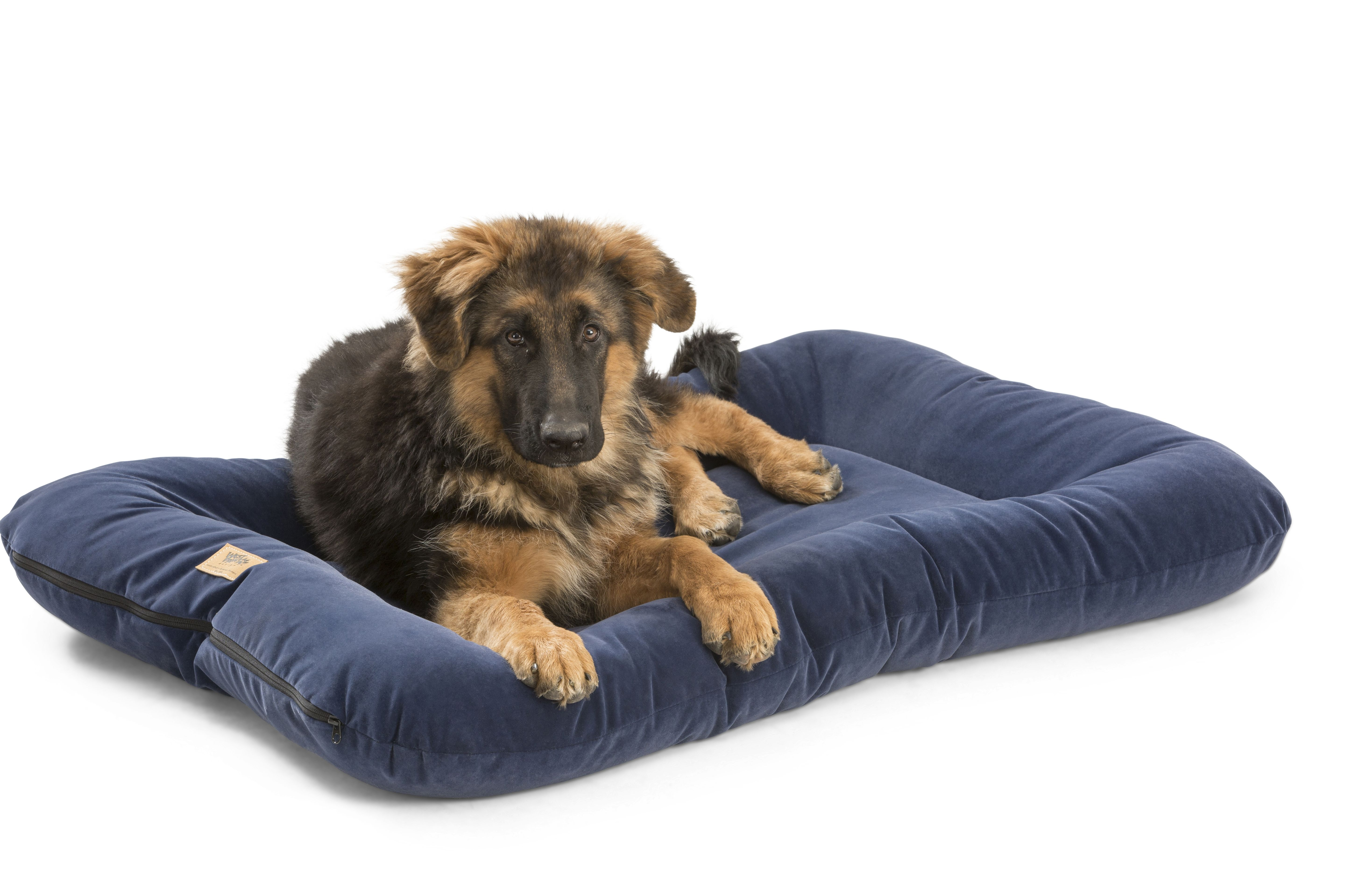 Heyday Bed in Midnight Organic dog beds, Clean pet bed