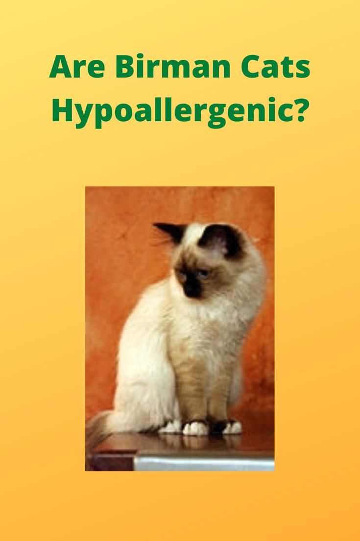 Maltitzu Maltese/Shih Tzu. Hypoallergenic breed (no shed