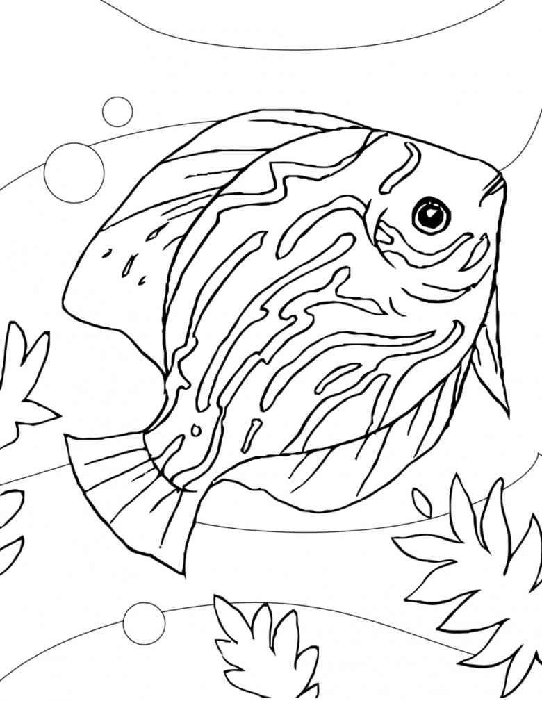 ausmalbilder fische aquarium  best style news and inspiration