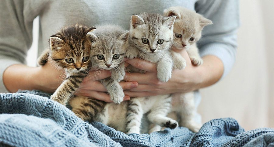 How To Tell If Your Kitten Was Weaned Prematurely Kitten