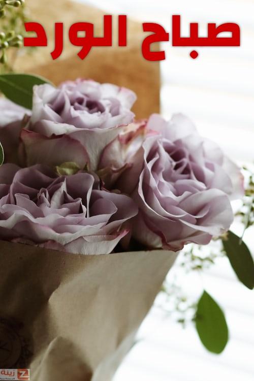 صور صباح الخير جديده مسجات صباح الخير 2020 صباح الورد Zina Blog Flowers Rose Plants