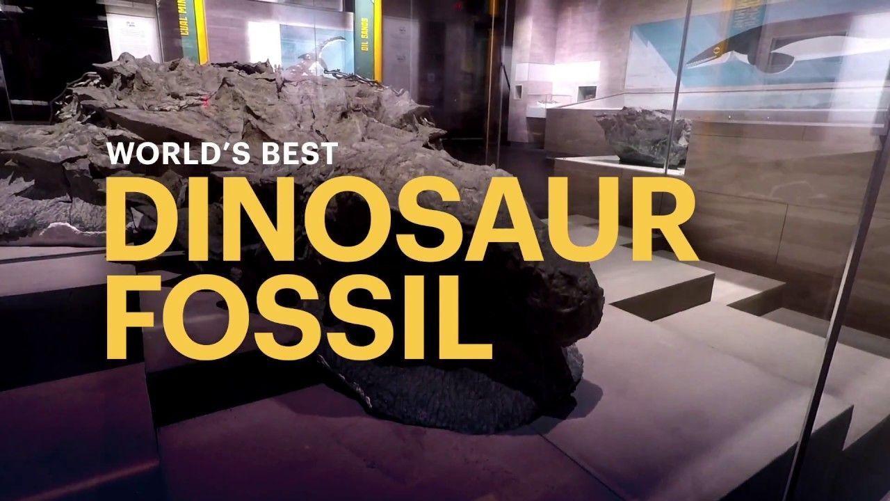 World's Best Dinosaur Fossil #historyofdinosaurs World's Best Dinosaur Fossil #dinosaurfossils World's Best Dinosaur Fossil #historyofdinosaurs World's Best Dinosaur Fossil #historyofdinosaurs