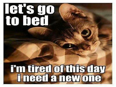 A New Day Please Cats Funny Animals Cat Pics