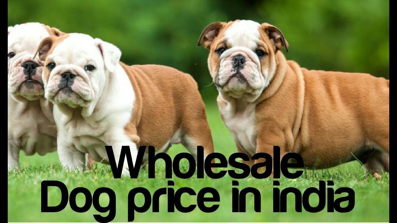 Dog Price In India Top 10 Popular Dog Breeds In India With Price Dog Breeds Dogs Popular Dog Breeds