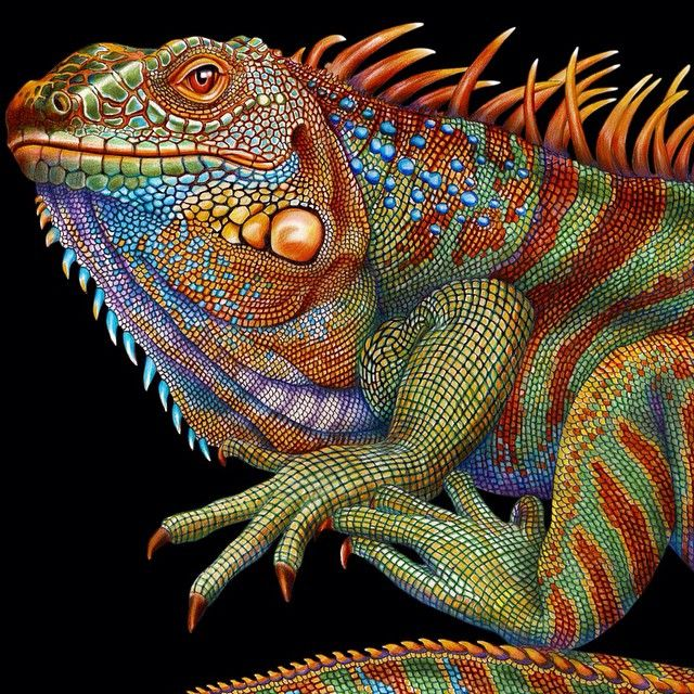 """Amazing Colorful Chamilions: """"Here's A Detail Of My Finished Iguana Colored Pencil"""