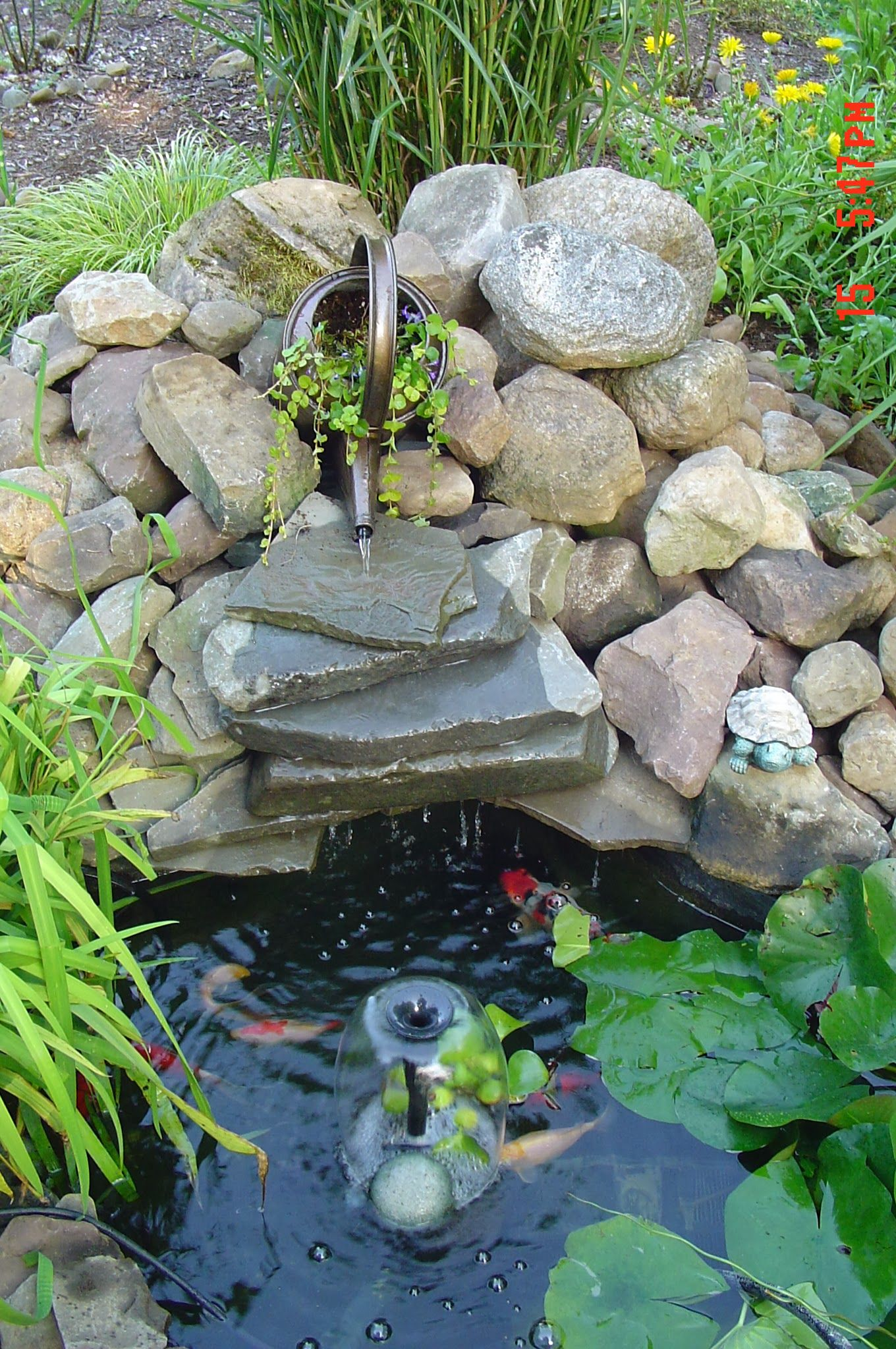 My little pond. My husbands idea to use the watering can.
