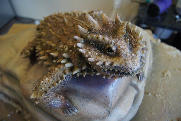 Cake Artist Sarah Jones : Cake (Reptiles) Examples on Pinterest 49 Pins