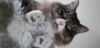 <center> Katzenbesitzer brauchen einen Glastisch! </center>