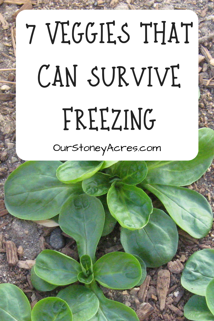 7 Vegetables that can Survive Freezing - Our Stoney Acres