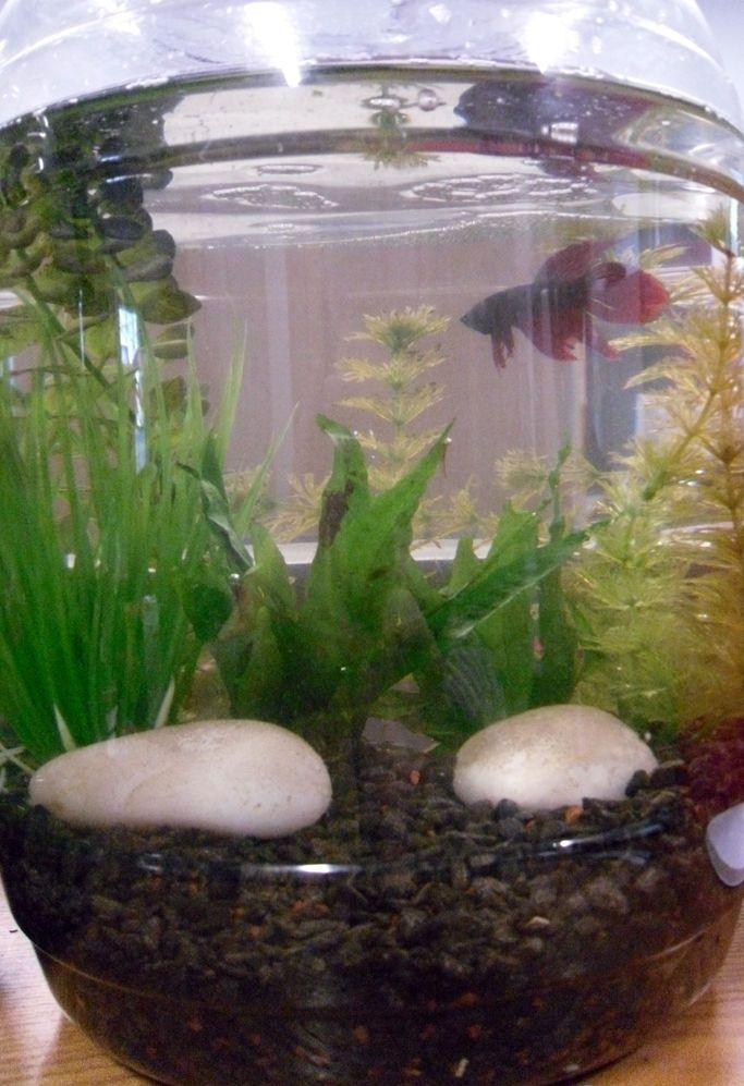 Recycled Deluxe Beta Tanks Beta Fish Tank Diy Fish Tank Betta