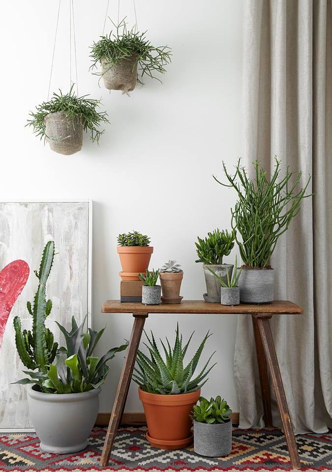Huoneilmaa Puhdistavat Viherkasvit