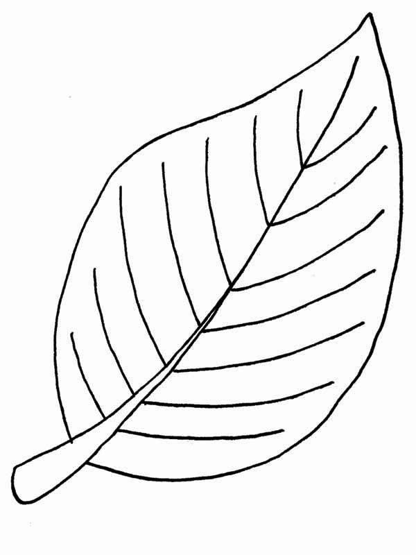 Beech Fall Leaf Coloring Page Netart Leaf Coloring Page Printable Leaves Tree Coloring Page