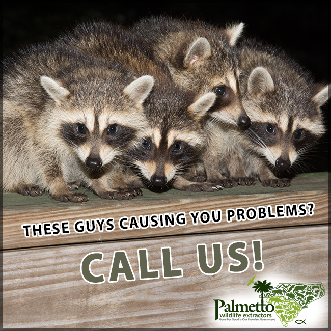 Pin on Wildlife Extractions