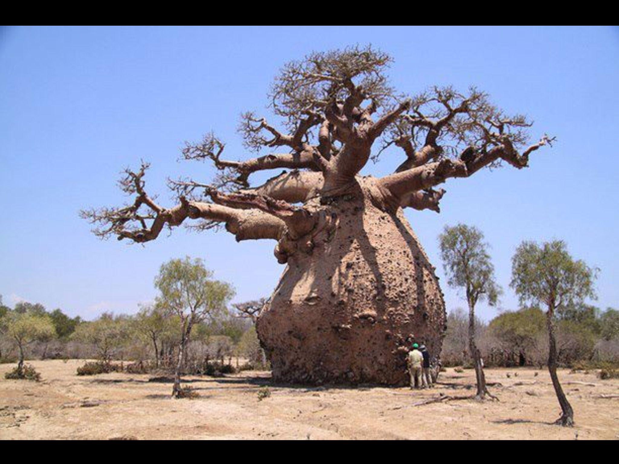 Výsledok vyhľadávania obrázkov pre dopyt árvores mais lindas do mundo