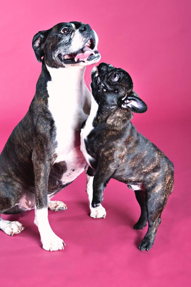 Pet Move Of The Month Holly Geoff S Trip To The Uk Petrelocation Com Pet Relocation Pets Pet Travel
