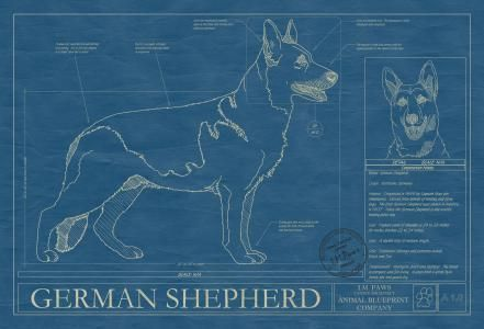 Animal blueprint company german shepherd dog print dog blueprints animal blueprint company german shepherd dog print malvernweather Gallery