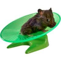 Hamsters Toys From Petco Com Small Pets Hamster Hamster Toys