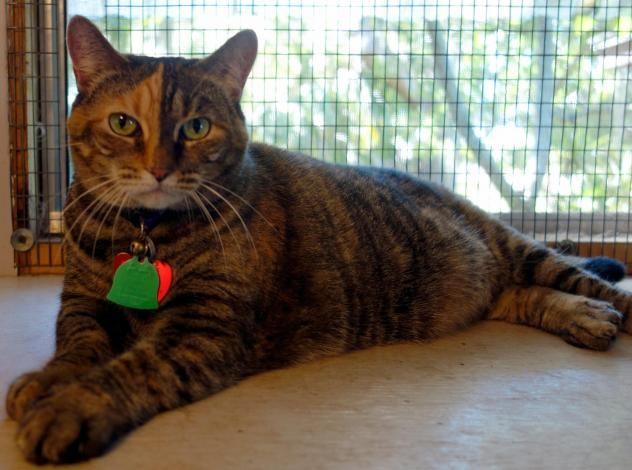 Adopt Sassy Sass On Petfinder Sassy Adoption Sass