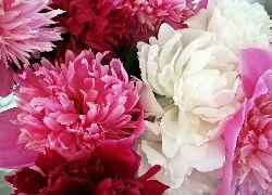 Tapety Piwonia Tapety Tapeta Zdjecia Tapety Na Pulpit Flowers Pretty Flowers Love Flowers