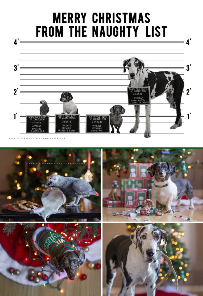 funny christmas card idea for pets pet mugshots dog mugshots christmas card ideas with dogs